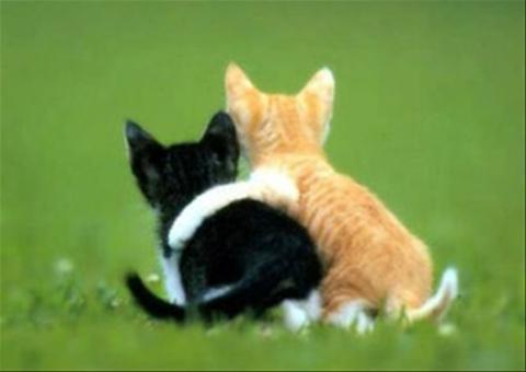 Kucing dan Meong lucu